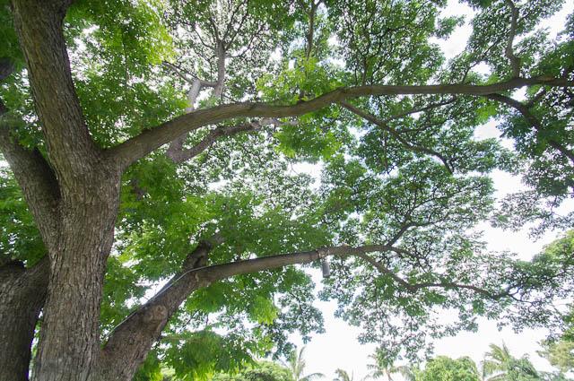 木 tree